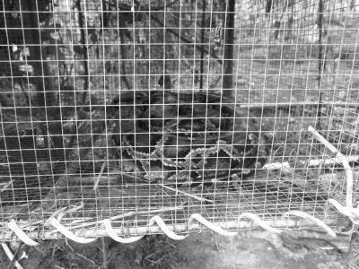 三亚一市民抓获2米长受伤蟒蛇