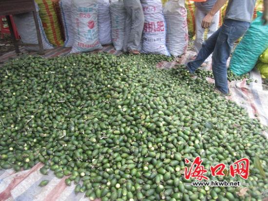 """海南槟榔产业打翻身仗 收购价上涨""""钱景""""大"""
