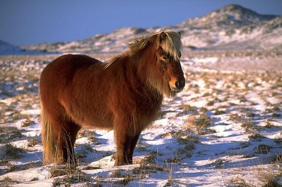 陕西频道 图片中心    1,与动物亲密接触     在冰岛,你可以近距离和