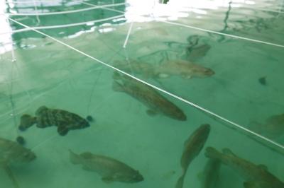 走进河南第一家石斑鱼养殖基地