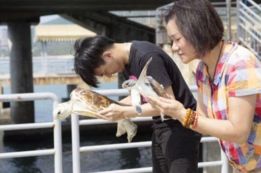 南山放生海龟最高5万 景区:不会抓已放再卖