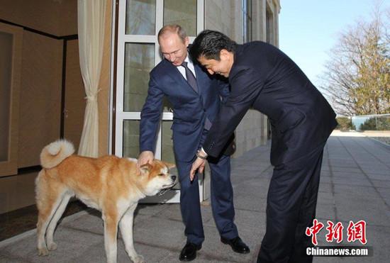 安倍致电普京祝贺生日商定APEC峰会举行会谈