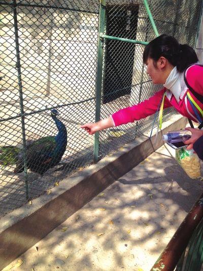 兰州:游客随意投喂动物消化不良 呼吁文明参观