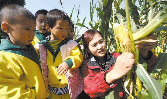 江苏东海中小学生学习认识五谷杂粮--扬子晚报网