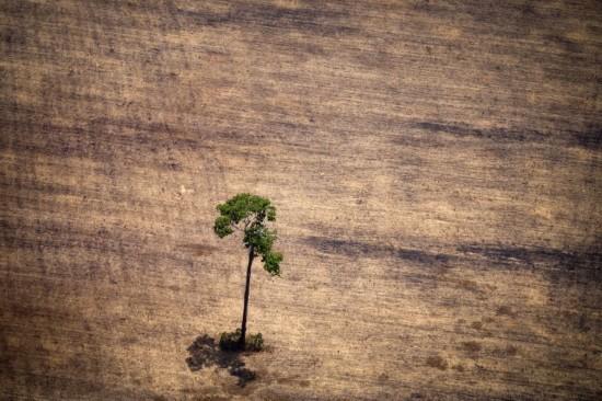 环保 砍伐/亚马逊丛林深处因遭受严重的乱砍滥伐而变得千疮百孔,大片雨林...