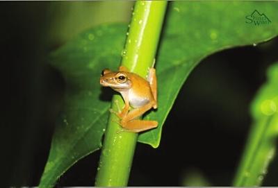 夜里树蛙高清电脑壁纸