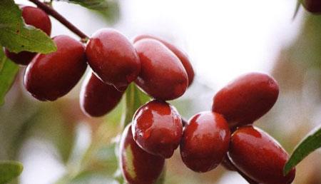 健康饮食:红枣这么吃最补身