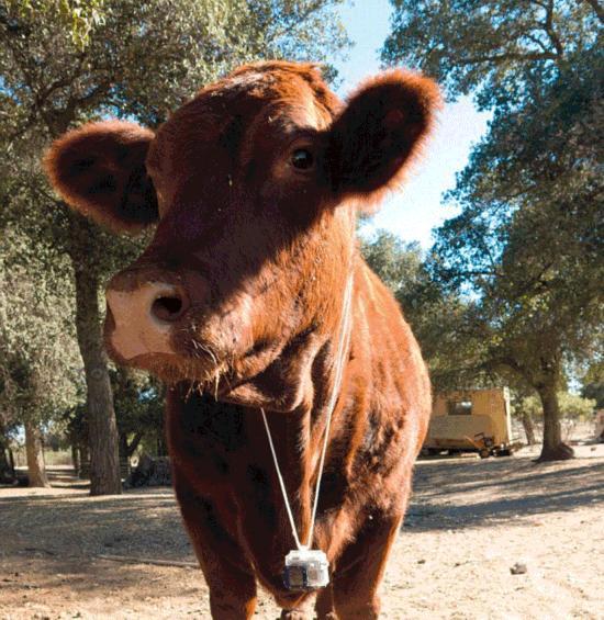 动物眼中的世界:宠物脖子上挂相机拍摄照片爆红【4】