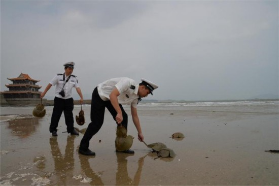 平潭开展水生野生动物保护执法行动