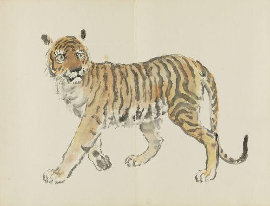 十二生肖之虎