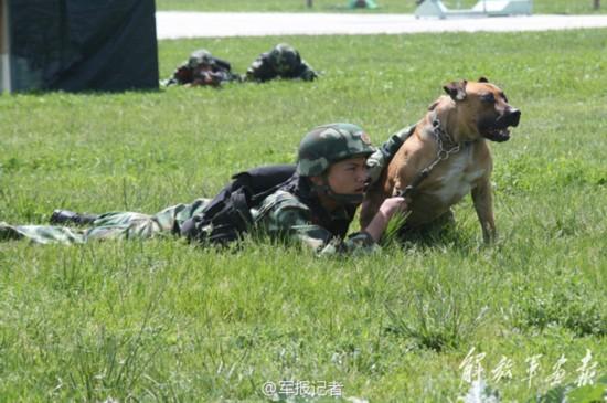 武警8663部队反恐训练现场 警犬也上阵