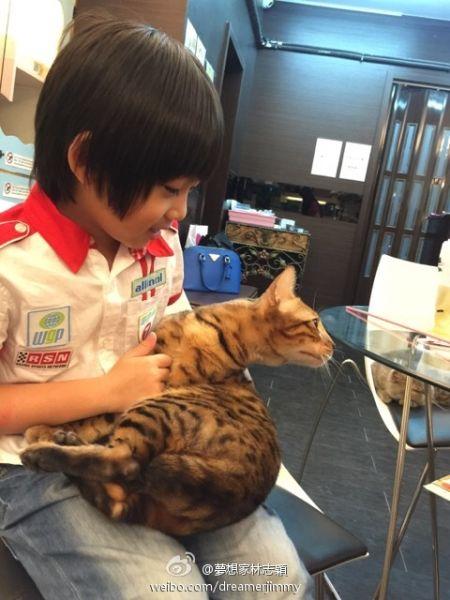 Kimi抱猫咪玩耍爱心爆棚 欲养宠物网友支招