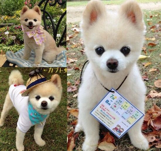 美国月入九万狗模爆红 盘点身价不菲的宠物明星【5】