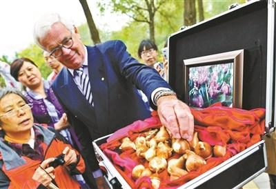 彭丽媛命名郁金香种球抵京入植北京植物园(图)