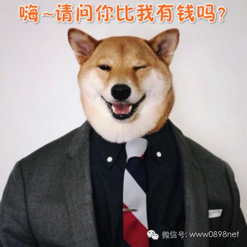 【微天下】狗狗当模特月入九万元,男子躺着玩