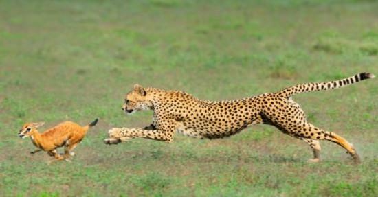 纪实摄影:29张顶级动物摄影作品【17】