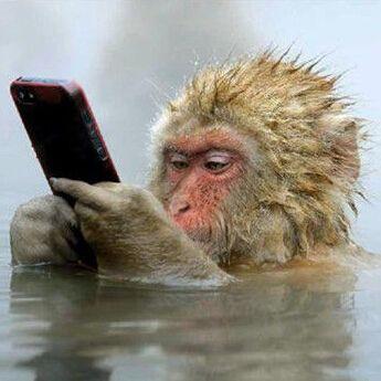 灵长类动物是最会享受的,日本猴子边泡温泉边玩手机太舒服了,那么多