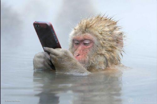 日本猴子边泡温泉边玩手机 网友:悟空又调皮了