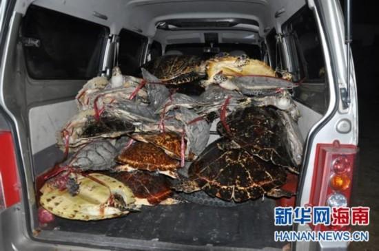 琼海警方破获7宗制售玳瑁案 查获标本157只