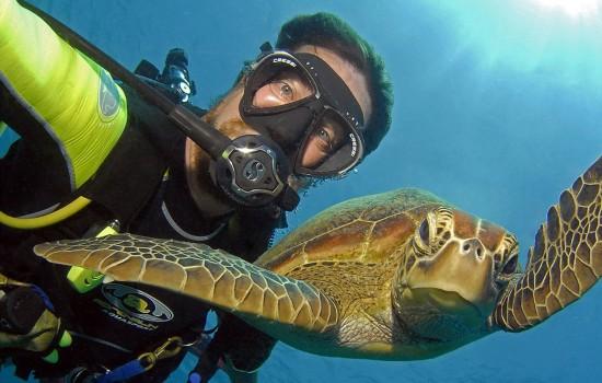 澳男子潜水与海龟鲸鲨等海底动物自拍走红(高清组图)