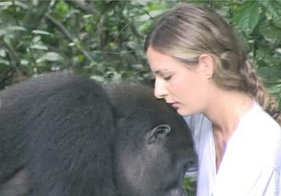 分别12年后再度重逢 英国女子与大猩猩深情相拥