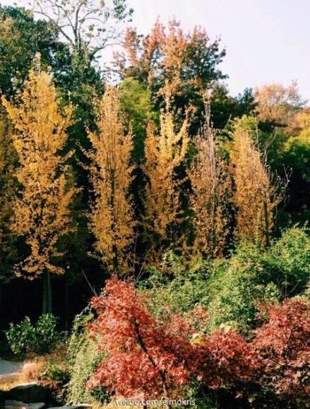 湖南大学秋景湖南大学秋景-色彩斑斓 湖南四大高校最美秋景图片