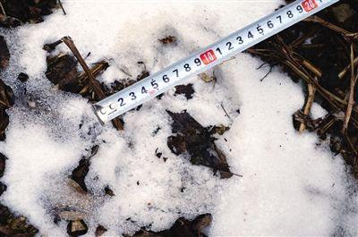 雪上的老虎脚印