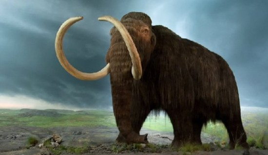 俄罗斯科学家称2015年开始试验克隆猛犸象
