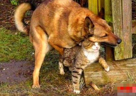 少妇乱伦和狗_动物界跨种族的\