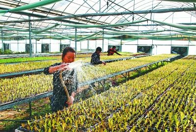 该示范园运用现代农业新技术和标准化管理方法种植西瓜,草莓,西兰花