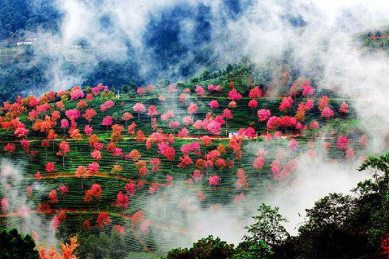 标签: 旅游景点 风景区  无量山樱花谷共多少人浏览:2508624  电话