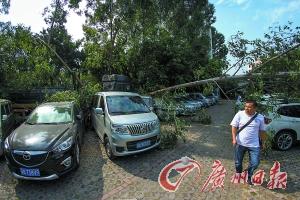 货车失控撼大树 16辆汽车无辜'受伤'