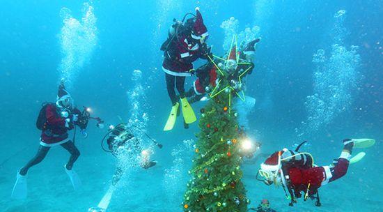 日本推出海底圣诞树潜水者可享受水中圣诞(图)