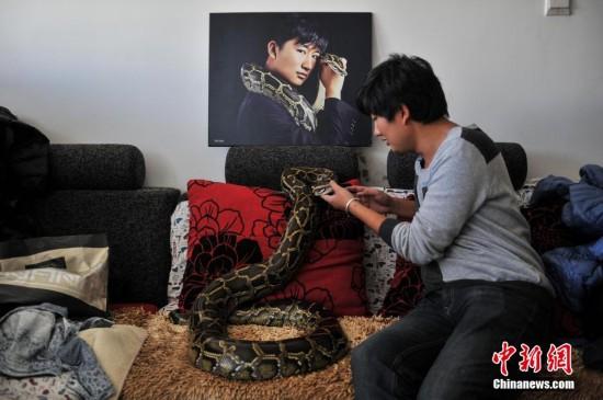 """昆明""""蟒蛇少年""""与25条蛇同居10年"""