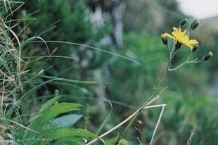 盘点最罕见奇特的植物
