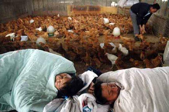 禽流感最新消息:上海一38岁男性感染确诊H7N文胸韩版性感图片