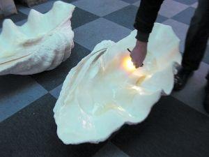 首家砗磲收藏馆内摆放着砗磲原料—长约1米的砗磲壳。