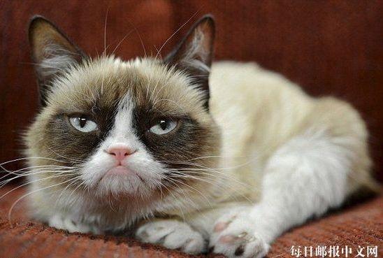 美国一宠物猫身价达6亿元掀热潮 超奥斯卡影帝(图)