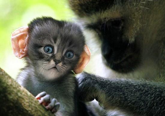 """美国艺术家PS创造""""猫猴"""""""