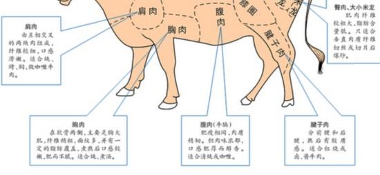 牛的全身结构图