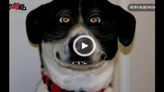 狂犬病能治好吗