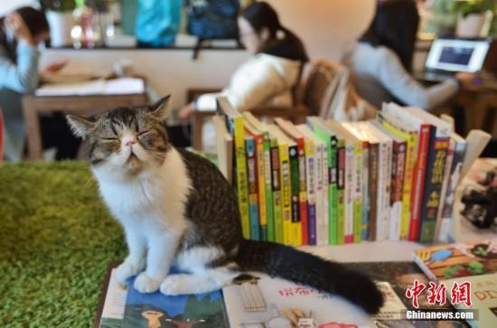 """猫咪书店亮相南京 品咖啡看图书见""""喵星人"""""""