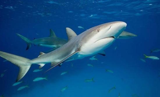 男子徒手钓565公斤百岁鲨鱼与巨鲨搏斗逾1小时