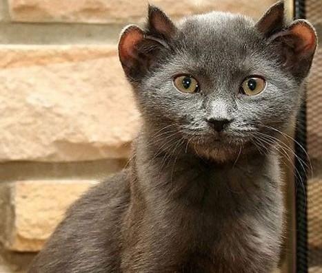 """绿色猫咪现身街头引轰动 超罕见""""变异动物""""盘点"""