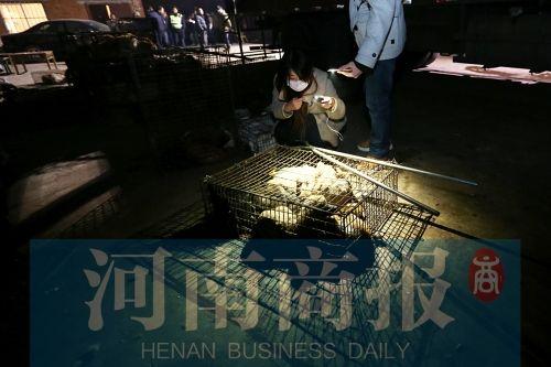 爱狗人士围堵荥阳贩狗据点 运送兔狗大货车被截停