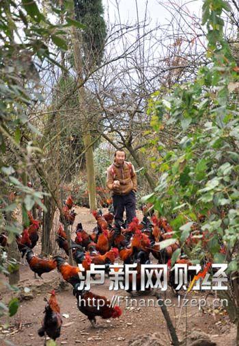 6楊志軍在林間喂雞
