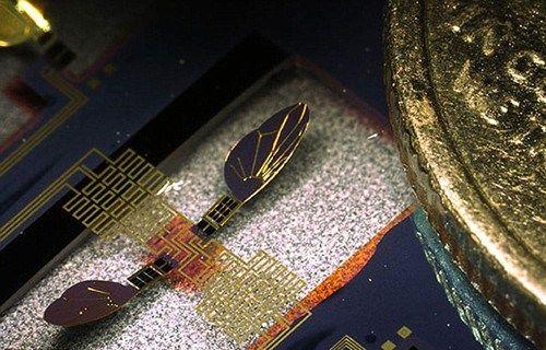 美國軍方研制出昆虫間諜監測裝置:翅膀僅3毫米長