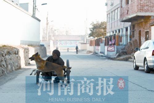 河南版忠犬八公推残疾主人摆摊 引热议老人收到捐助