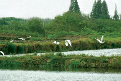 湿地公园.jpg
