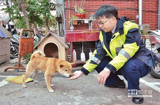 """柴犬逢人就摇臀获封狗界""""瑞奇・马汀""""(图)"""